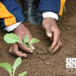 child-plant-seed.jpg
