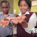 eco-charity-south-africa-worm-farming